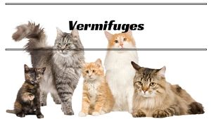 Vermifuges chats