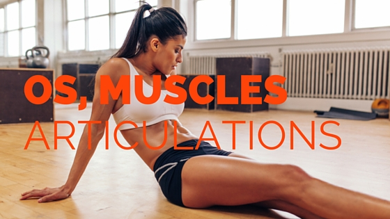 Os, muscles et articulations