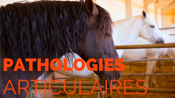 Pathologies articulaires chevaux