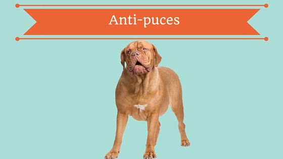 anti-puces chiens